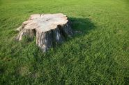 Non-Harmful Ways to Get Rid of Tree Trunks