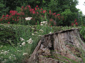 Information On How To Get Rid Of Tree Stumps