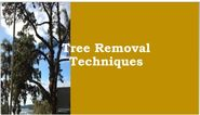 Tree Removal Techniques