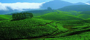 Munnar Tour Package - Book 03 Days Munnar Cochin Tour Package | Holidays At India