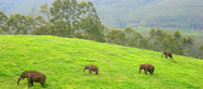 India Wildlife Tour Packages - Wildlife Holiday Packages in India | Holidays At India