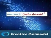 Creative Animodel An Inroduction To A Biomedical Research Organization