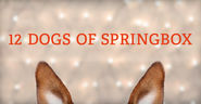 12 Dogs of Springbox