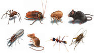 Various Effective Options to Control Pests