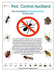 How to Find Best Pest Control Service in Auckland