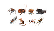 Easy Alternatives to Get Rid of Pests