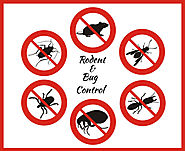 Pest Control - Get Rid From Rodents and Bugs