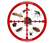 How Auckland Pest Control Protect Your City