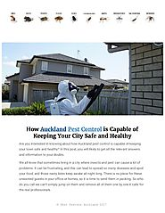 How to Find Best Pest Control Company In Auckland