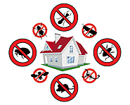Effective Methods of Pest Control In Auckland