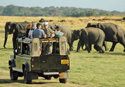 Safaris in Nature Reserves