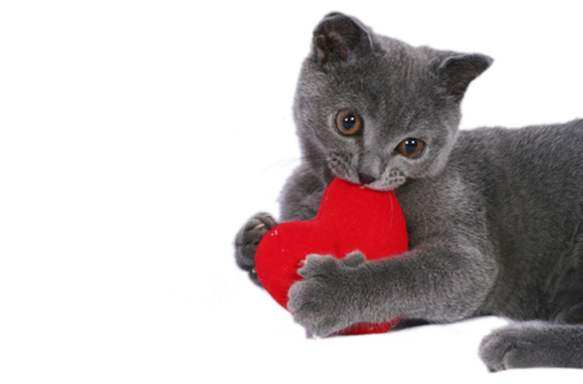 Catnip Toys For Valentine S Day : The cat s meow diy valentine gifts for your kitty a