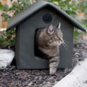 small indoor cat houses