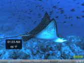 Real Aquarium HD Pro with Airplay Streaming