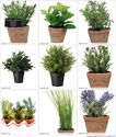 Artificial Herbs in Pots - Find a Red Hot Bargain - Clipzine