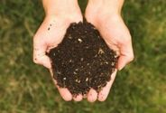 How To Make Organic Fertilizer in 5 Easy Steps -