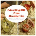 Extracting DNA From Strawberries Experiment