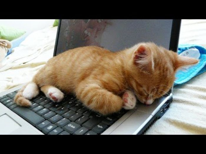 Image of: Compilation funny Cats Vs Machines Compilation Sammiches Psych Meds 10 Hilariously Adorable Cat Videos To Brighten Your Day