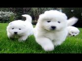 World's Fuzziest dogs
