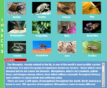 Interactive Insect Book for Kids «