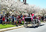 A New Vision Of Spring: Washington DC Cherry Blossom Festival - Travelplanet.in - Free Travel and Tourism Guide