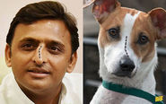 Akhilesh Yadav and a Dog
