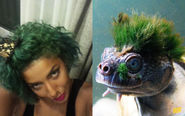 Diandra and the Punk Rock Turtle