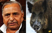 Mulayam Singh and a Wild Boar