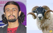 Sonu Nigaam and a Bighorn Sheep