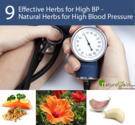 Natural Herbs for High Blood Pressure - 9 Effective Herbs for High BP