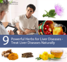9 Powerful Herbs for Liver Diseases - Treat Liver Diseases Naturally