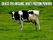 Top 10 Best Grass Fed Organic Whey Protein Powder Reviews