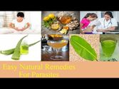 Easy Natural Remedies for Parasites to Give Relief from Disease