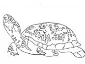 Cute Turtle Coloring Sheets | Coloring Pages