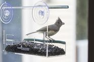 Clear Window-mounted Bird Feeder with Removable Tray for Easy Refill and Cleaning by Yardiculture