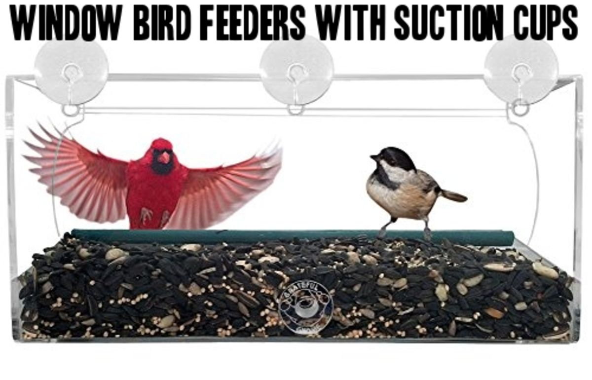 Headline for Best Selection of Window Mounted Bird Feeder Styles - Reviews