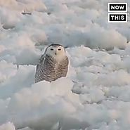 NowThis - The Dodo | Bird Surfing on Ice