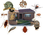 The Most Common Solutions Of A Pest Control Firm