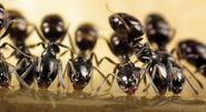 Why You May Need To Use Ant Control And Removal Solutions