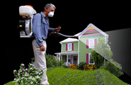 Mosquito Control: Maintain Your Grass And also Residence Safer