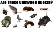 Cleanse Your House Of Pests With The Aid Of Expert Bug Control Services