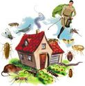 Top 5 To find the Finest Pest Control Company
