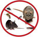 Best 5 To choose the Ideal Pest Control Company