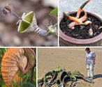 15 Rare, Exotic & Amazing Plant Species - WebEcoist
