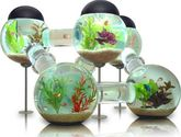 Fish Bowl (connected)