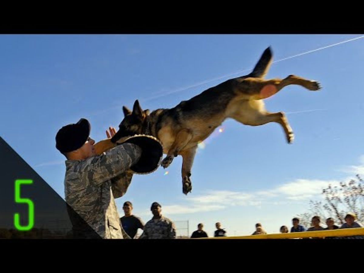 Headline for 5 Most Incredible Animal Soldiers