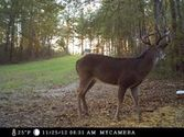 Covert Game Trail Cameras Reviews