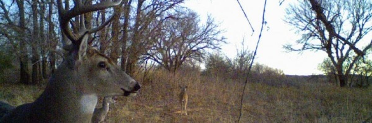 Headline for Best Covert Game Trail Cameras Reviews