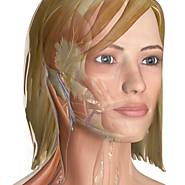 InnerBody.com | Your Interactive Guide to Human Anatomy