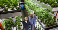 Fort Collins pair grow aquaponic farming